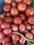 Verdura del tomate Fotografía de archivo libre de regalías