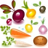 Verdura dell'insieme completo. radice. illustrazione di stock