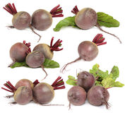 Verdura della barbabietola su bianco Fotografia Stock Libera da Diritti