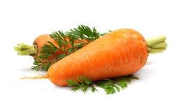 Verdura della carota con il foglio verde Fotografia Stock