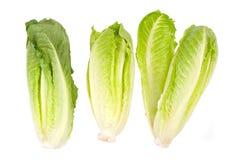 Verdura della lattuga su priorità bassa bianca Immagini Stock Libere da Diritti