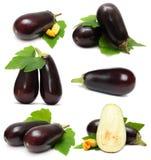 Verdura della melanzana Fotografia Stock