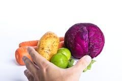 Verdura di raccolto della mano Fotografia Stock Libera da Diritti