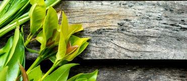 Verdura en el fondo de madera Imagen de archivo libre de regalías