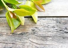 Verdura en el fondo de madera Fotos de archivo