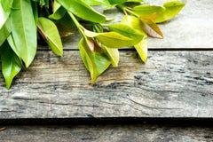 Verdura en el fondo de madera Fotos de archivo libres de regalías