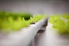 Verdura fresca in azienda agricola Fotografia Stock Libera da Diritti