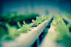 Verdura fresca in azienda agricola Immagine Stock Libera da Diritti