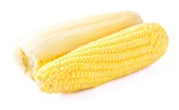 Verdura fresca del maíz Imagen de archivo libre de regalías