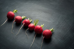 Verdura fresca del rábano Foto de archivo libre de regalías