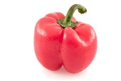 verdura fresca fredda di colore rosso del pepe caldo Immagini Stock