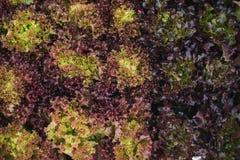 Verdura fresca nell'inverno immagine stock libera da diritti