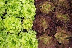 Verdura fresca nell'inverno fotografia stock