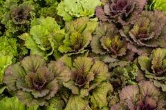 Verdura fresca verde Immagine Stock