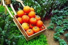 Verdura in giardino Fotografie Stock