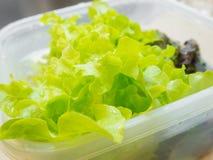 Verdura idroponica. Immagine Stock Libera da Diritti
