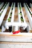 Verdura nell'azienda agricola di coltura idroponica Fotografie Stock Libere da Diritti