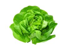 Verdura o insalata verde della lattuga del burro isolata su bianco fotografia stock