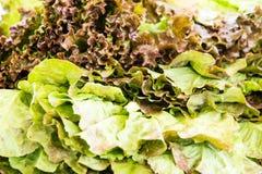 Verdura orgánica en el mercado de los granjeros Imagen de archivo libre de regalías
