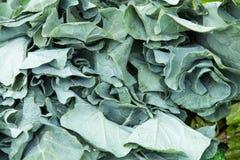 Verdura orgánica en el mercado de los granjeros Imágenes de archivo libres de regalías
