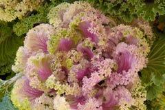 Verdura orgánica fresca. Imagen de archivo libre de regalías