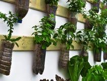 Verdura organica Fotografie Stock