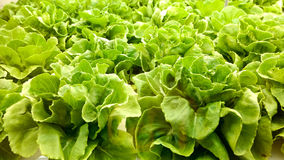 Verdura organica Immagine Stock Libera da Diritti