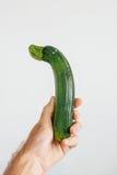 Verdura organica dello zucchini in mano umana Fotografia Stock