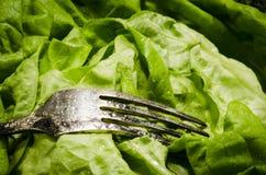 Verdura que adelgaza la comida sana por completo de vitaminas Foto de archivo