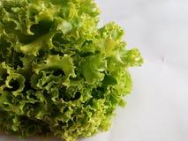 Verdura sana de la ensalada verde Imagen de archivo libre de regalías
