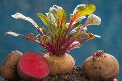 Verdura sana de las remolachas frescas imagen de archivo libre de regalías