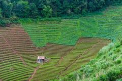 Verdura a terrazze verde e cottage antico al chiangmai Thail Fotografia Stock