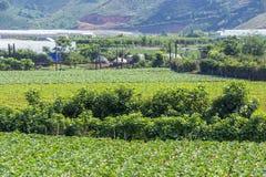 Verdura verde dell'azienda agricola Fotografie Stock