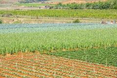 Verdura verde dell'azienda agricola Immagine Stock