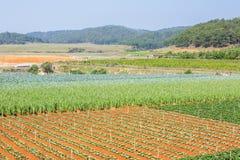 Verdura verde dell'azienda agricola Immagini Stock