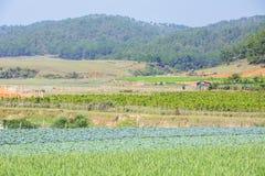 Verdura verde dell'azienda agricola Immagine Stock Libera da Diritti