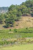 Verdura verde dell'azienda agricola Fotografia Stock
