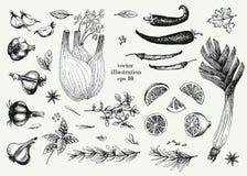 Verdura, verde ed insieme disegnato a mano dell'illustrazione di vettore delle spezie Oggetto di stile inciso retro verdura Può e Fotografia Stock Libera da Diritti