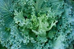 Verdura verde fresca Immagine Stock