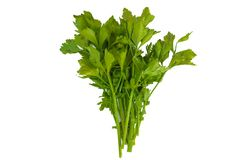 Verdura verde fresca del sedano della foglia del sedano su fondo bianco fotografia stock libera da diritti