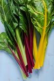 Verdura vibrante, bietola svizzera dell'arcobaleno Fotografie Stock Libere da Diritti