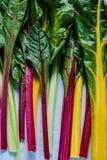 Verdura vibrante, bietola svizzera dell'arcobaleno Immagine Stock