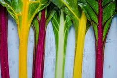 Verdura vibrante, bietola svizzera dell'arcobaleno Fotografia Stock