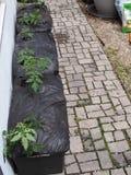 Verdura y Herb Container Gardening urbanos Fotos de archivo