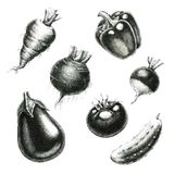 Verduras bosquejos a mano ilustración del vector