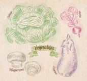 Verduras col, berenjena, rábanos, setas ilustración del vector