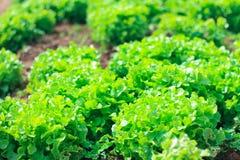 Verduras crecidas en el suelo con valor alimenticio y vitaminas stock de ilustración