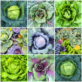 Verduras de hoja, col y collage de la lechuga Foto de archivo libre de regalías