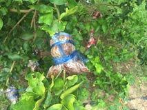 Verduras de hojas verdes Fotografía de archivo libre de regalías