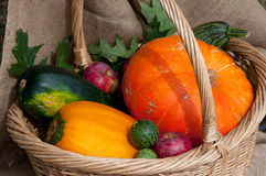 Verduras de la cosecha del otoño Imagenes de archivo